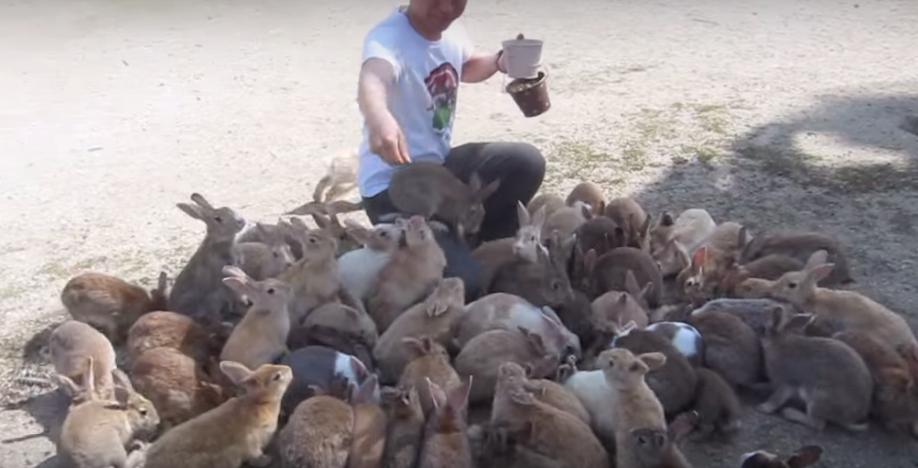 ウサギ島の海外の反応