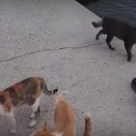 【海外の反応】外国人「猫好きにはたまらない!」愛媛県の猫島が話題に