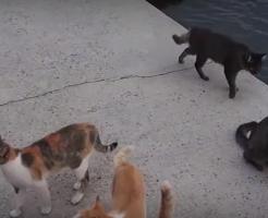 猫の島海外の反応