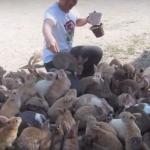 【海外の反応】ウサギ好きには嬉しい?ウサギ島をみた外国人の反応