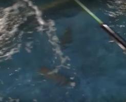 釣った魚をすぐ食べるお店海外の反応